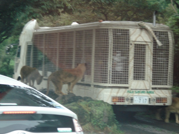 Not us, but this is just how close you are to the animals
